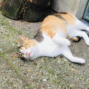 DigiBeet en Katten Café image 2