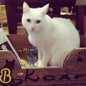 DigiBeet en Katten Café image 3